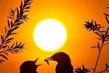 O por do sol