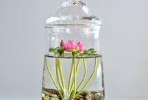 inside plants ^_^