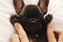French Bulldog :-*