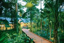 Tropical / Palm trees, pineapple & pina colada
