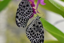 Butterflies~ / by Tracy Preschat