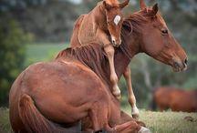 Konie - Klacze z małymi