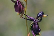 Orchids - Orchidee  ... Che spettacolo!!!
