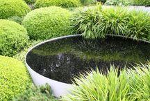 Courtyard Planting