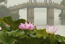 Jardins de lotus