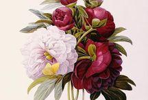 Graphic Design: Botanical