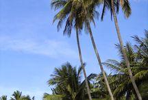Viet Nam Coastal Charm