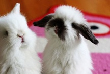ZDJ | We Like Bunnies / I have a huge love for bunnies.