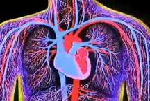 Anatomia ja fysiologia