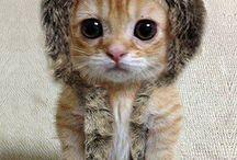 Cute / Cheesy but cute