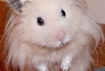 Hamsters / by Nicole
