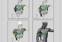 рисование тело человека