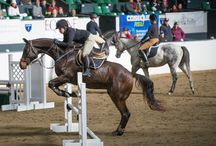 Ride With the Best at the 2015 Equine Affaire in Massachusetts / .