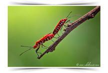 Bugs / by Michael Alaev