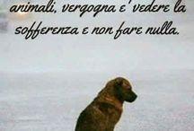 gli animali ci amano e hanno fiducia in noi. Non li abbandonare o maltrattarli  . RIFLETTI!!!