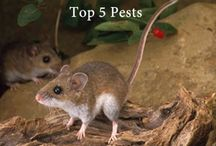 TOP 5 PESTS IN ALBERTA HOMES / Bugs, rodents and even birds can be a serious problem if they decide to set up camp in your house. They can seriously damage your home, carry disease and are just plain yucky!
