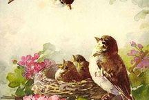 Catherine Klein (1861 - 1929 ) artista das flores! Outros temas - frutos, pássaros...