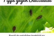 gegen Blattläuse
