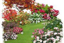 Jardin bruyère