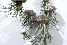 plante deco / cultivarea ,pastrarea,pregatirea plantelor pentru decorari