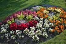 Flower beds / by Blair Findlay