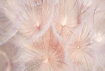 Dandelions:)