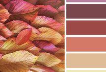 Paleta de cores :. inspiração