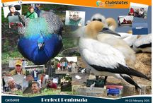 CM15008 Perfect Peninsula