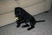 bby dog