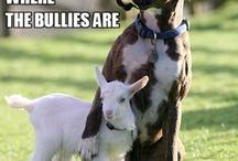 cute animals :o