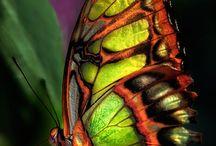 mariposas / Alguna vez las confundieron con adas...