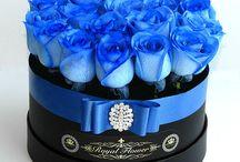 Azul arreglos azules