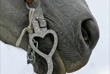 Horsey stuff / by Janice Organ