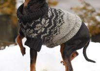 Одежда для собакина