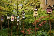 Birdhouses / by Robin Campanale