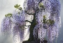 ...Flores&Plantas !!