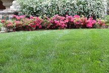 shrubs bushes & flowers for my colorado garden / looking for ideas for my flower garden! / by BrandyJo Miller
