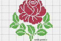 rózsa x