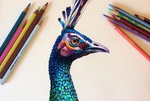 arte lápis de cor