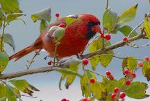Birdies / Love the birds