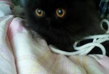 Kit Kitty Kat