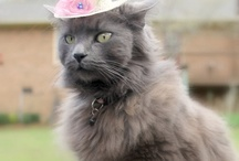 Cool & Stylish Cats / Cats are the best, just gangstas.