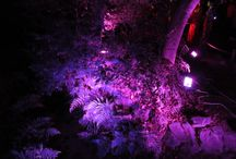 呼応する木々 下鴨神社 糺の森
