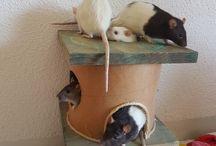 RATS DIY