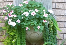 Garden Container / by Joanne