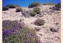 -scent of myrtle and rosemary- (Mediterraneo/Mediterranean landscape)