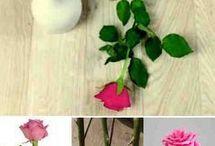 flores rosales