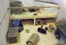 guinea | pig / DIY for Guinea Pigs / Gör det själv till dina marsvin!