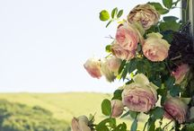 Roses and green