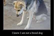 Dogs with no homes